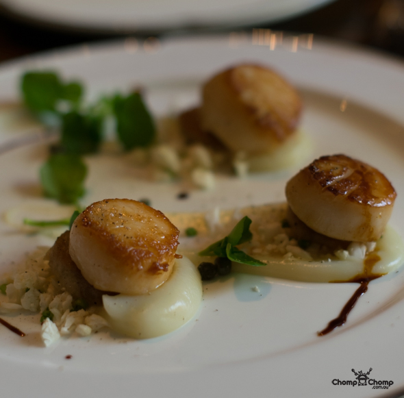 """Seared scallops"" ""cauliflower"" ""pressed pork"" ""capers"" ""watercress"" ""Perth Restaurant Reviews"" ""Perth food blog"" ""Perth restaurants"" ""Perth gluten free"" ""Perth fructose friendly"" ""Perth food reviews"" ""restaurants perth"" ""food blog"" ""Chompchomp"" ""food photos"" ""gluten free"" ""fructose friendly"" ""gluten free cooking"" ""gluten free recipes"" ""fructose friendly recipes"" ""gluten free raw food"" ""fructose friendly raw food"" ""food event"" ""West Australia food festival"" ""launch event"" ""food festival"" ""wine festival"" ""Perth food festival"" ""eat drink Perth"" ""eat drink perth 2014"" ""top ten"" ""City of Perth"" ""Perth city"" ""Terrace Hotel"" ""The Terrace Hotel"" ""Terrace Perth"" ""Roving lunch"" ""roving diner"" ""Passport"" ""vouchers"" ""Cheeky Sparrow"" ""Jean Pierre Sancho"" ""Stables bar"" ""The Stables perth"" ""gluten free roving dinner"""
